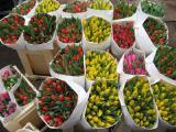 Продам тюльпаны к 8 марта оптом по лучшей цене!