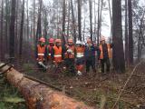 Арбористика, удаление деревьев