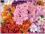 Тюльпаны, альстромерия и гиацинты к 8 марта