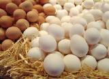 Яйцо куриное С1 отборное оптом