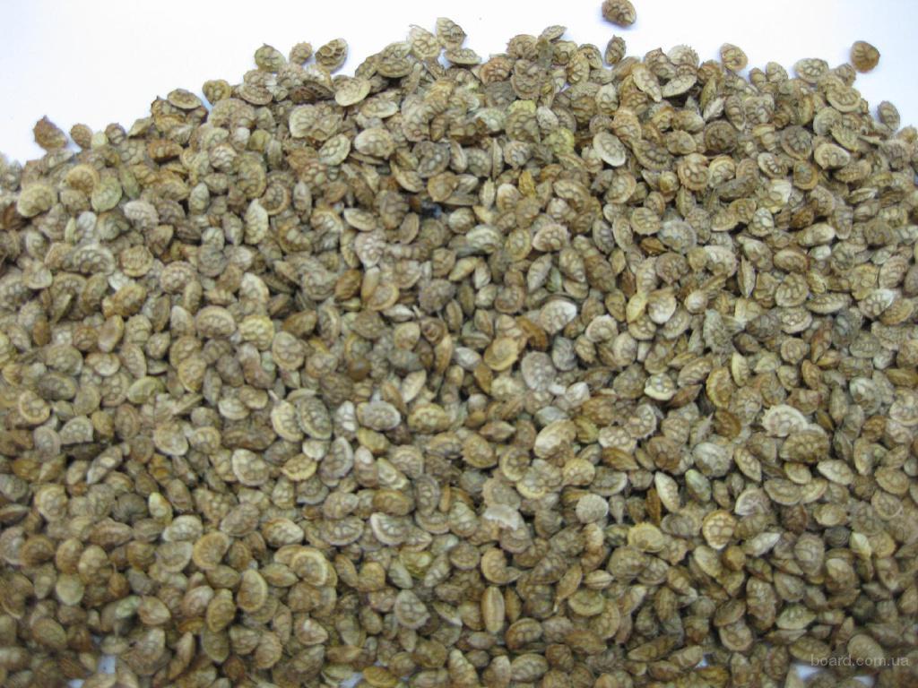 эспарцет сорт Песчаный 1251