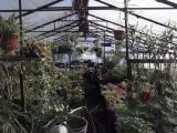 Продажа лекарственных и декоративных растений