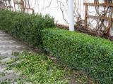 Реставрація газонів,внесення добрив та засобів хімічного захисту