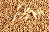 """ТОВ """"Тіара"""" купує зерно !!!"""