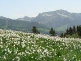 тур в долину нарциссов на майские, туры закарпатье майские праздники, берегово, ужгород, мукачево