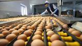 Куриное яйцо, по самой низкой цене