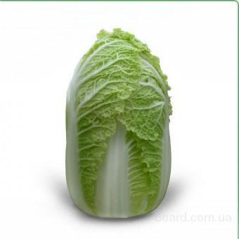 Семена пекинской капусты Zena F1 / Зена F1 (Китано)