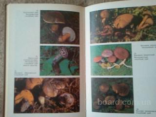 Справочник. Съедобные и ядовитые грибы Карпат