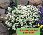 Продам комнатные и уличные декоративные растения