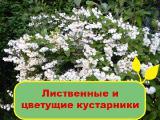 Лиственные и цветущие кустарники