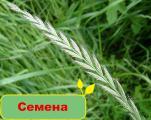 Купить качественные семена в Greensad
