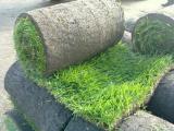 можно заказать и купить рулонный газон высокого качества