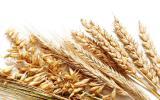 Куплю зерновые