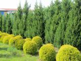 Декоративные растения оптом и в розницу по оптовым ценам