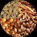 соя рапс подсолнечник пшеница кукуруза