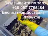 Пиявки медицинские от 20 шт., бесплатная доставка