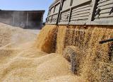 Перевозка зерна по всей Украине