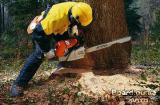 Спил деревьев Днепропетровск