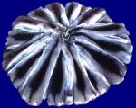 шкурки шиншиллы выделанные 32 см от ушей, темный стадарт