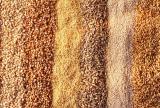 Куплю зерно отходы и масличные отходы по Украине.