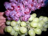 белый и красный виноград (Египет)