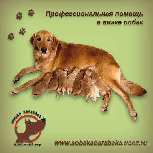 Помогу развязать собаку!!!Киев.