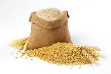 Куплю кукурузу , пшеницу, сою, жито, семечку масличную