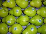Прямые поставки груши, яблок из Аргентины,Чили