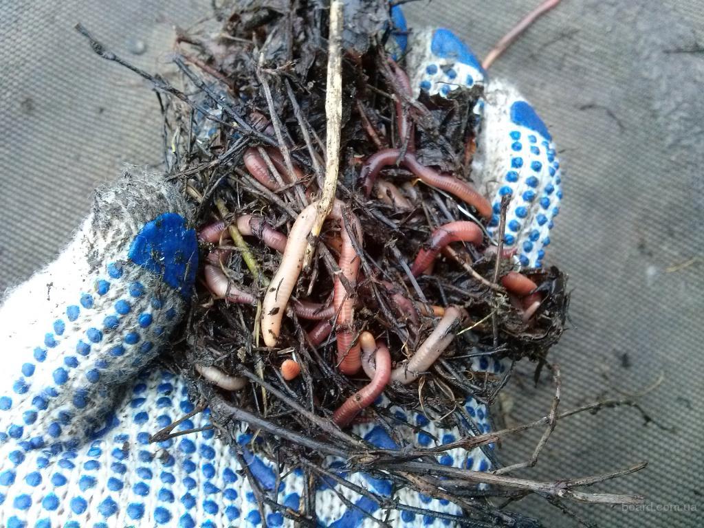 выползки для рыбалки