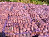 Купить картофель оптом собственного производства!