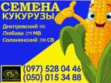 Семена кукурузы Днепровский 181 СВ, Любава 279 МВ, Солонянский 298 СВ