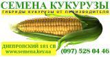 Семена гибрида кукурузы Днепровский 181 СВ от производителя с документами - Гарантия качества.