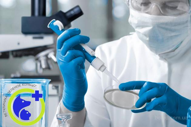 Анализы на наличие инфекций