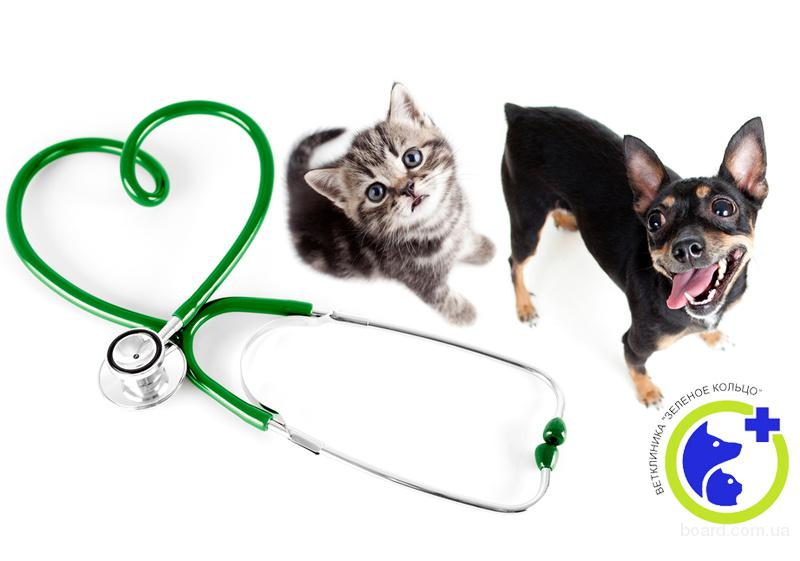 Кардиолог для собак