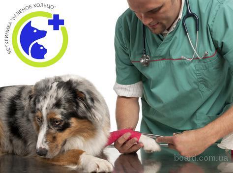 Травматология для животных