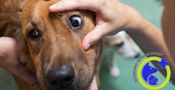 Офтальмология для животных