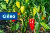 Оптова продаж насіння овочів і квітів- Сійко