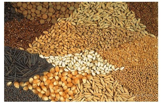 импортные семена канадской селекции