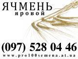 Семена яровых культур от производителя - качество, гарантии. Яровой ячмень Командор, Гелиос (элита и 1