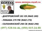 Продам семена кукурузы. Гибрид Днепровский 181 СВ ФАО 180. Семена от производителя