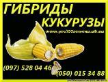 Продам семена кукурузы. Гибрид кукурузы Лювена ФАО 260. Семена кукурузы от производителя