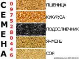 семена сои медея, семена ячменя гелиос, семена ячменя командор, подсолнечник ясон - от производителя