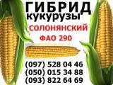 Продам семена кукурузы, гибрид Солонянский 298 ( фао 290 ), семена от производителя. Гарантия качества, документы