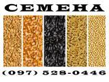 Семена кукурузы, посевной ячмень, семена сои и подсолнечника от производителя. Украинская селекция
