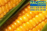 Семена кукурузы - Солонянский 298 СВ (ФАО 290) - от производителя