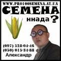 Гибриды кукурузы ТУТ. Днепровский, Любава, Солонянский и другие. Семена кукурузы от производителя
