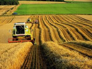 Купим агрофирмы с сельхозугодьями от 1000 га