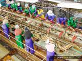 Працівники на завод по переробці риби в Польщу