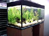Запуск и уход за аквариумом