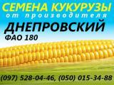 Продам семена кукурузы, п.е. 80 000 семян, протравлены, документы - Днепровский 181 СВ